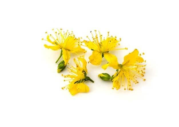 kwiat dziurawca wspomaga obniżenie ciśnienia i jest obecny w kroplach cardioactive
