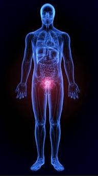 stres oksydacyjny to znane problemy przy przeroście prostaty którą skutecznie leczy urotrin